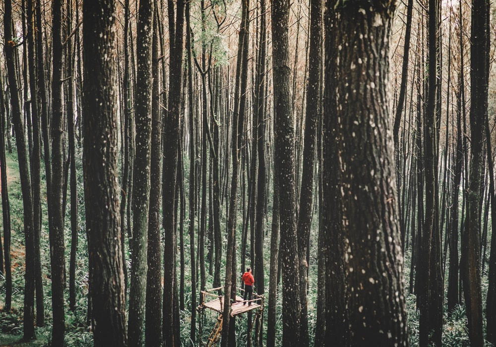man standing on a tree stand surrounded by forest trees