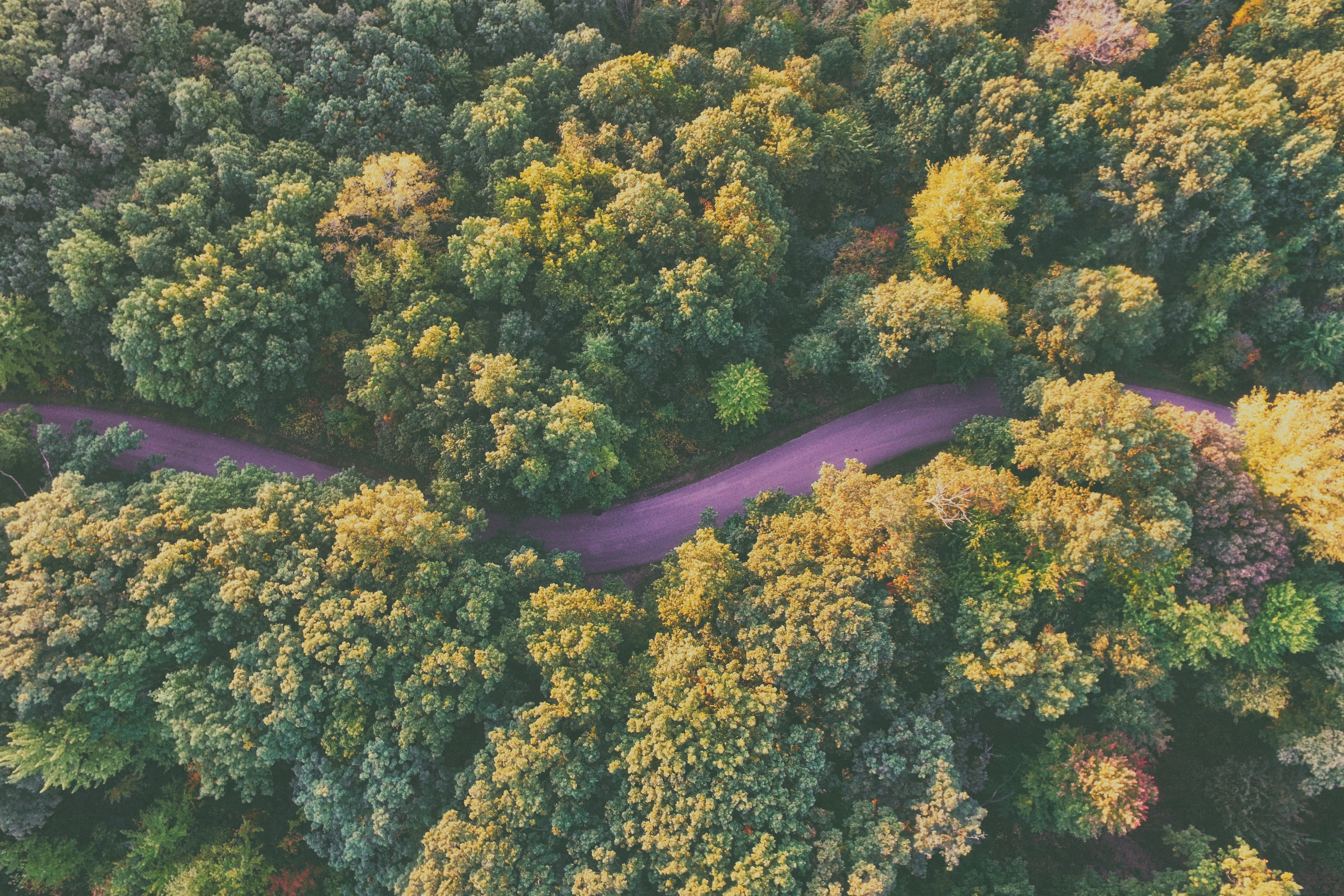 A drone shot of a purple-hued winding road through a forest