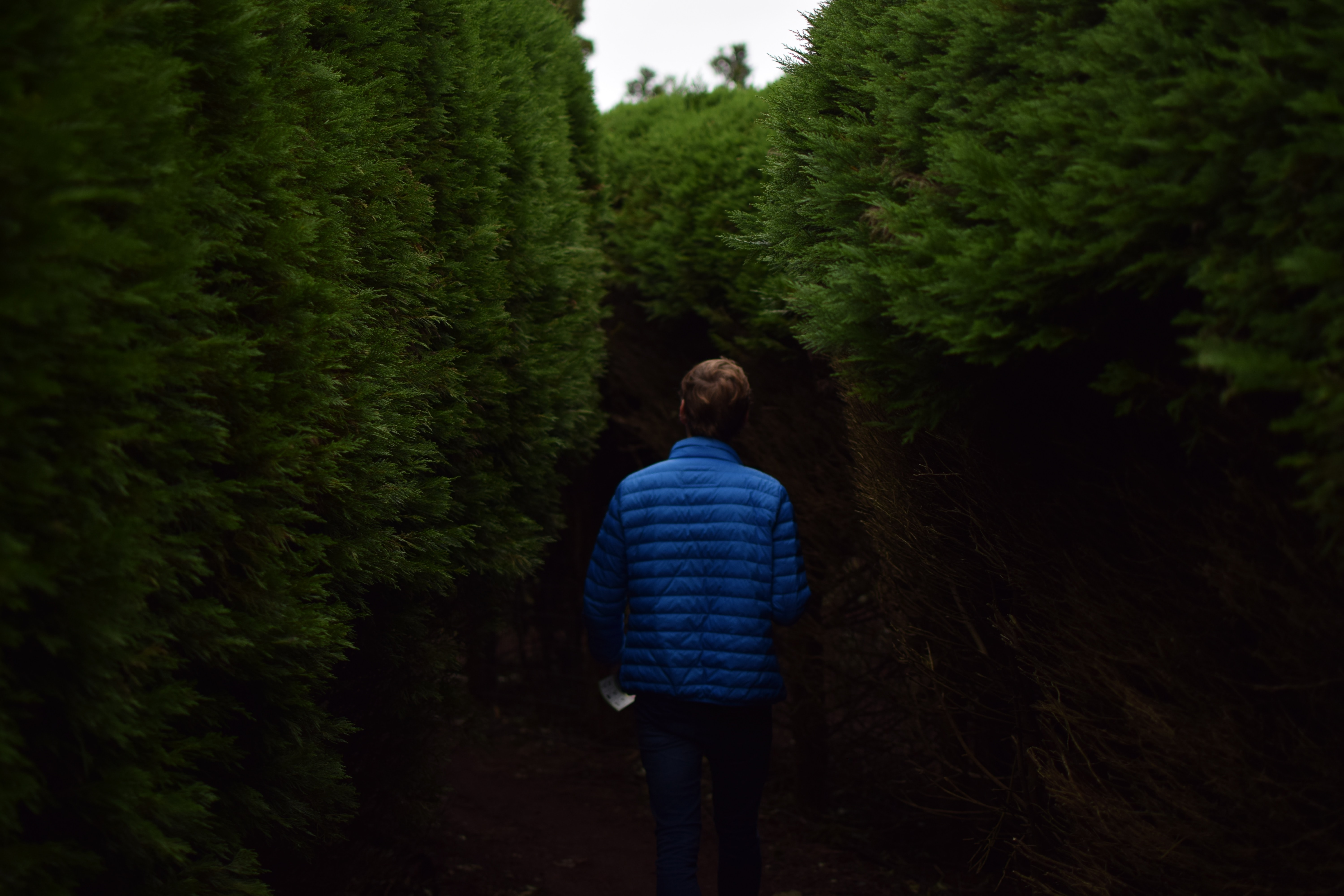 A man with a blue jacket staring into a bush hallway at an outdoor maze