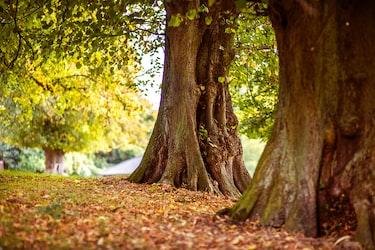 「木を見て森を見ず」になってない?ビジネスでの正しい使い方をわかりやすく紹介!