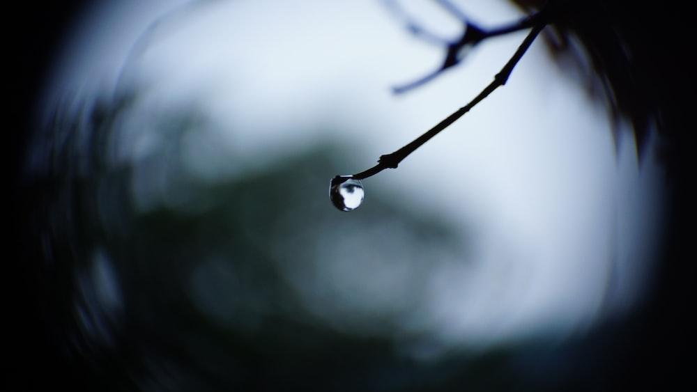 focus photo of water droplet