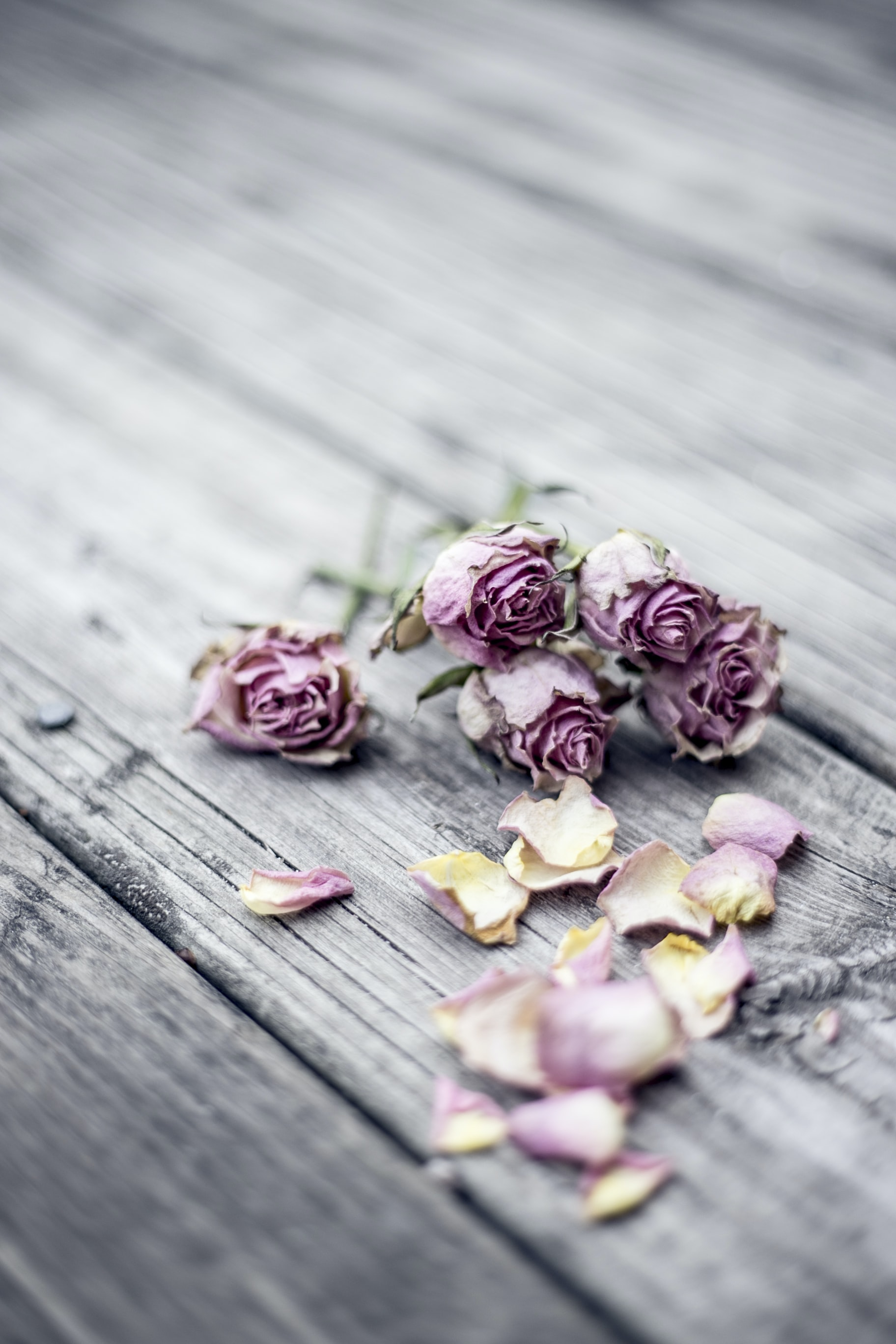 pink rose flowers on gray wooden floor