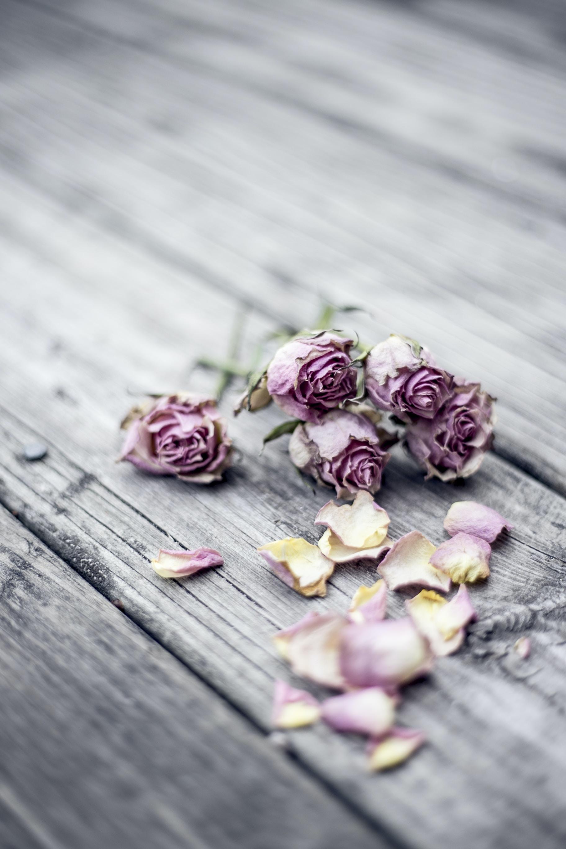 pink rose flowers on gray wooden floor