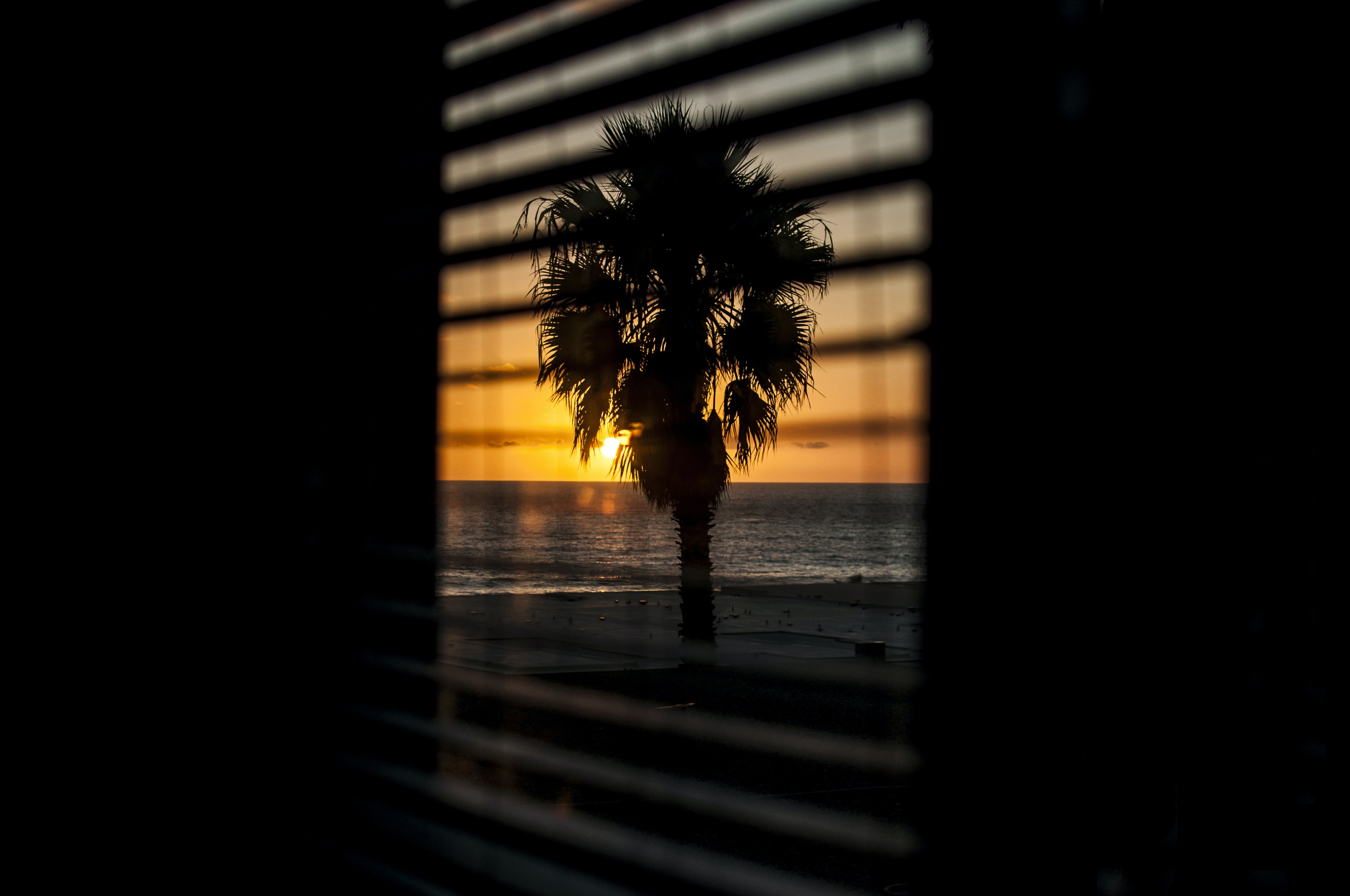 A palm tree, the ocean, and the sun above the horizon, seen through window blinds