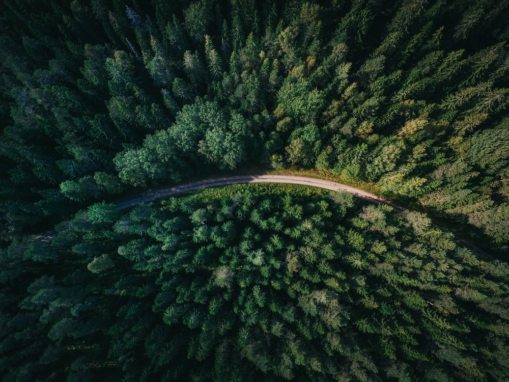 aerial shot of road surrounded by green trees
