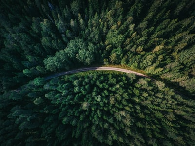 aerial shot of road surrounded by green trees aerial zoom background