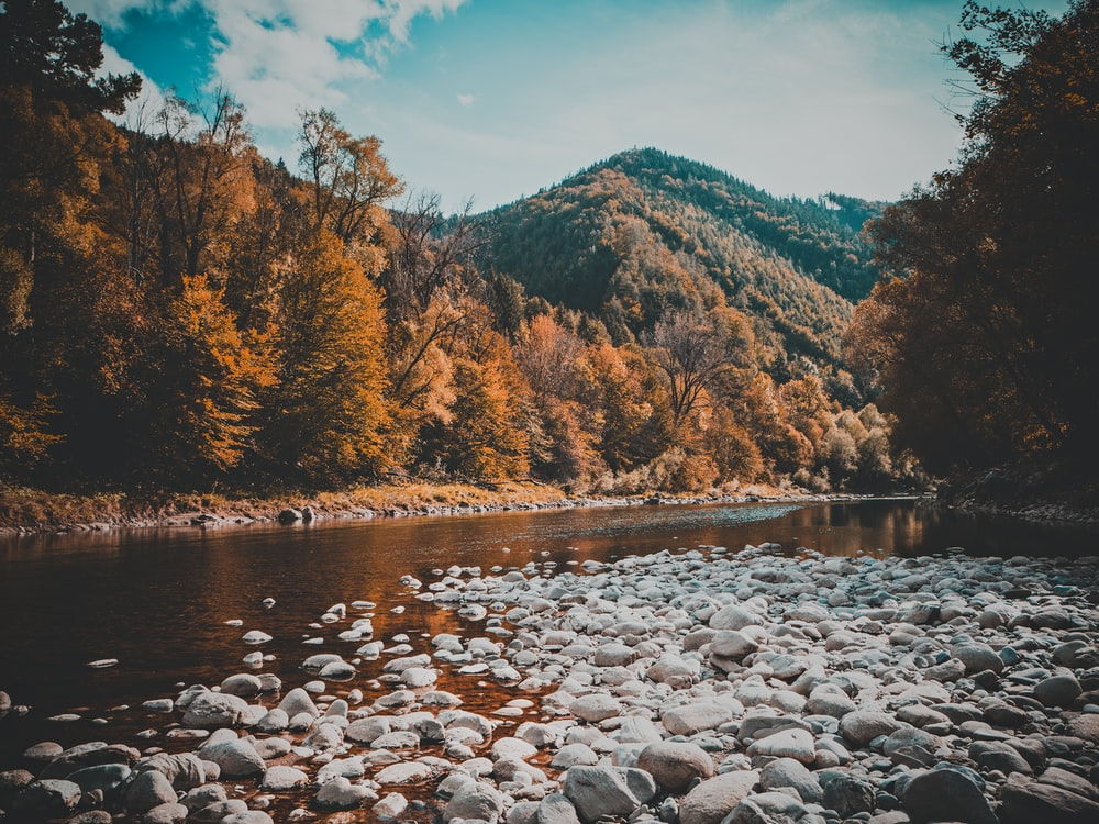 rocks on stream of water between brown tall trees with mountain background during daytime