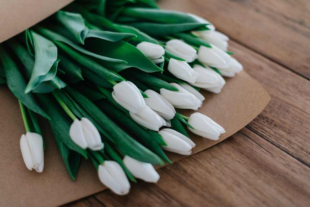 White Tulips Pictures Free Images On Unsplash