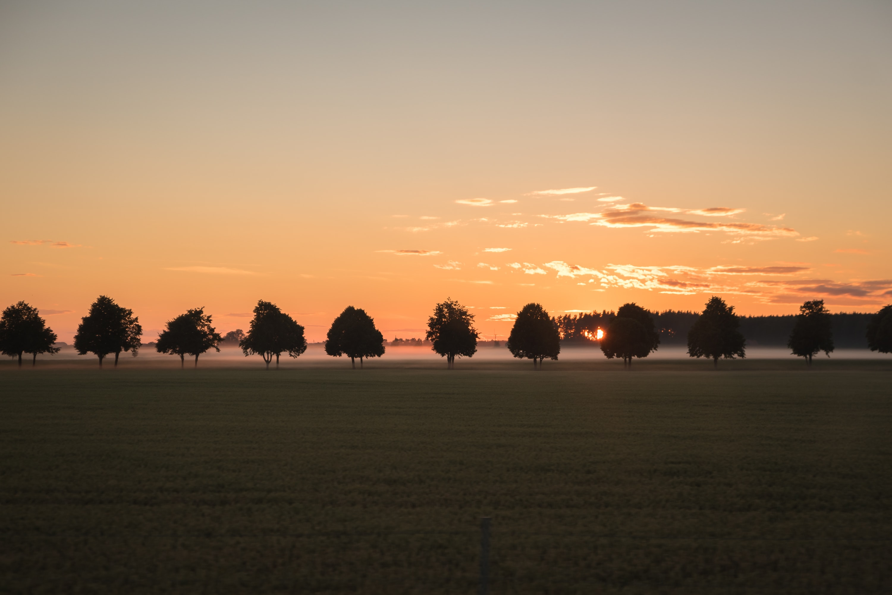 A line of trees in the distance of a grass field, with the sun setting behind