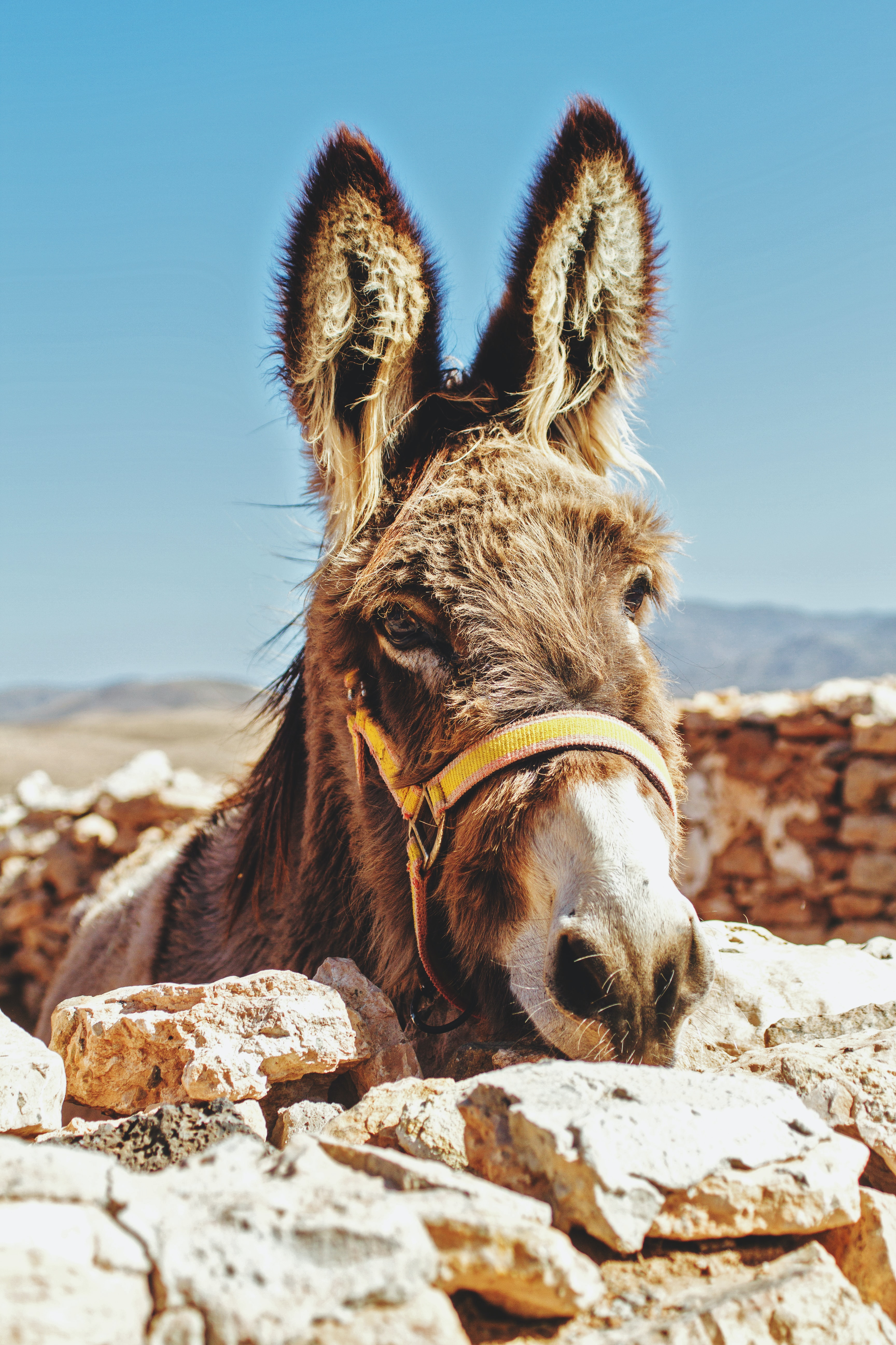 The Donkey and the Elephant stories