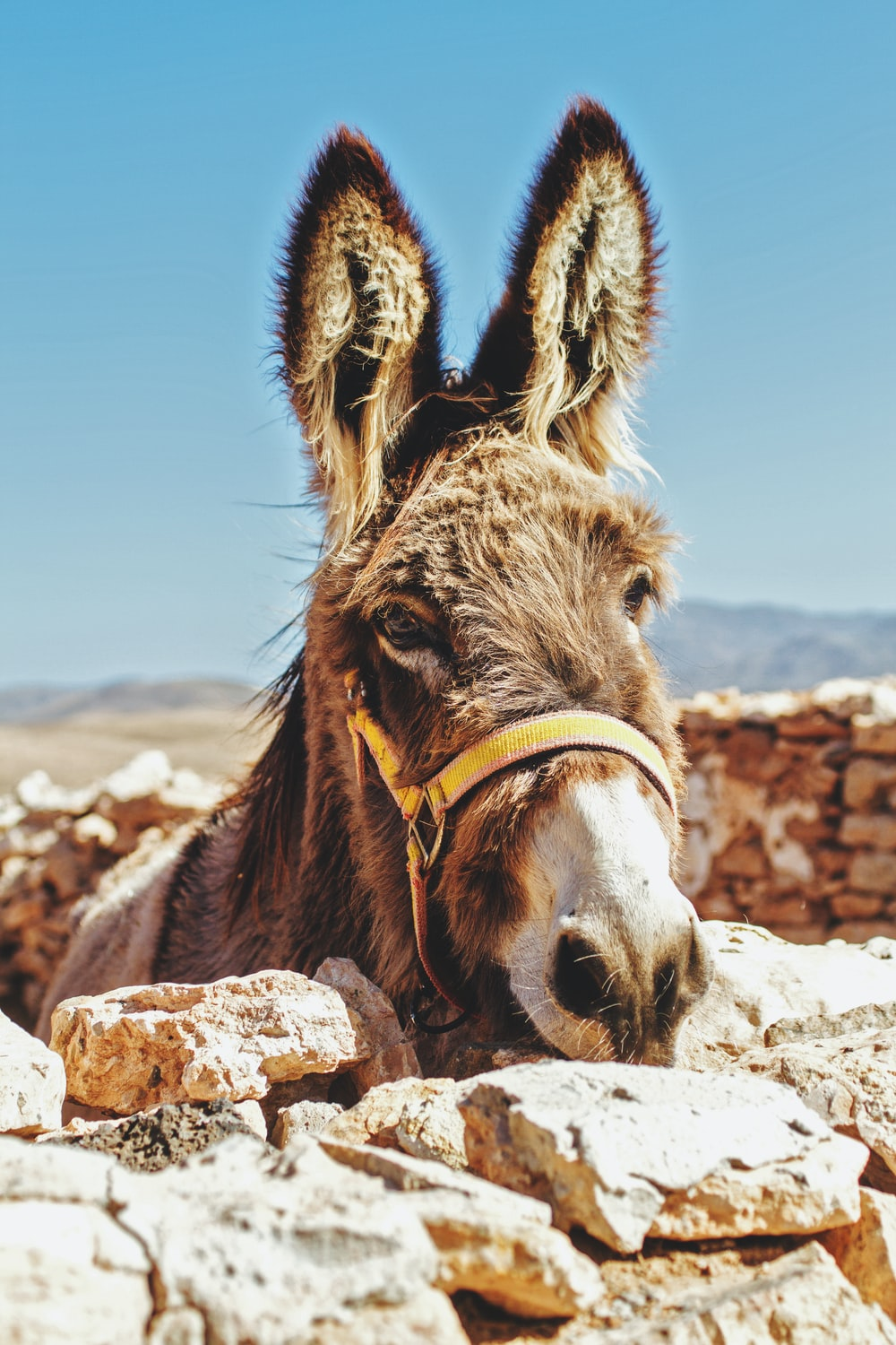 brown donkey standing beside brick wall