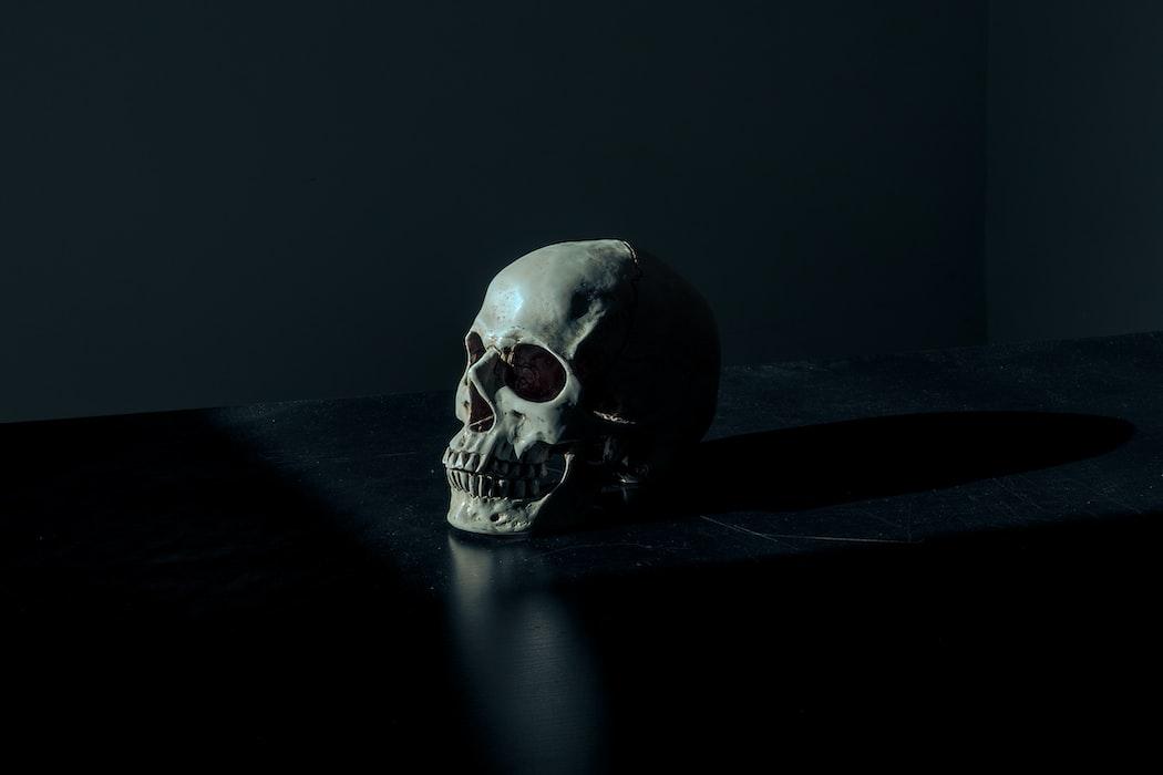 A skull facing the light; photo by Mathew MacQuarrie via Unsplash