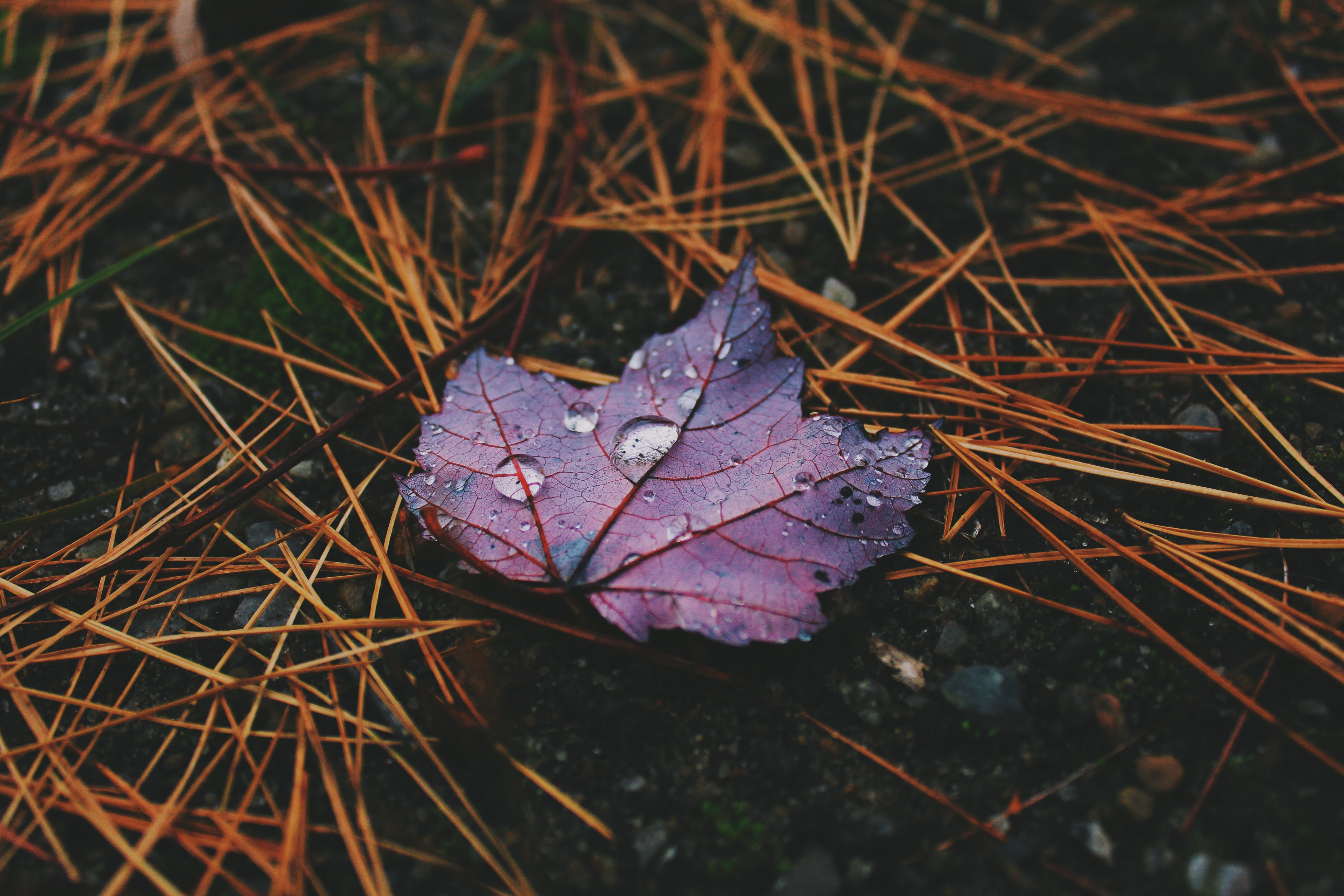 red plant leaf with water droplets on the ground