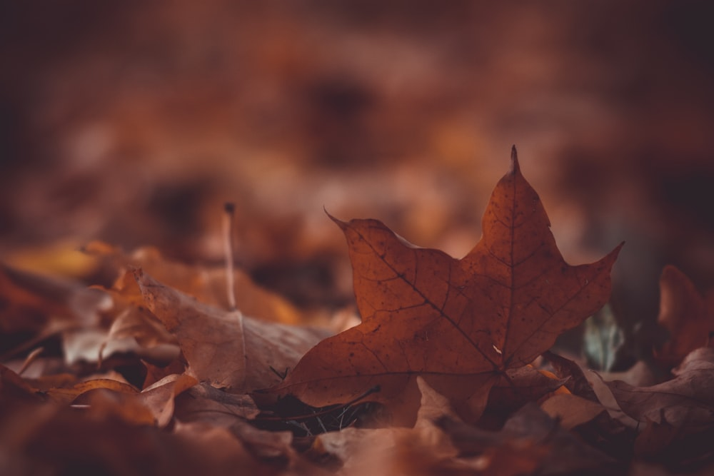 shallow focus photo of brown dried leaves