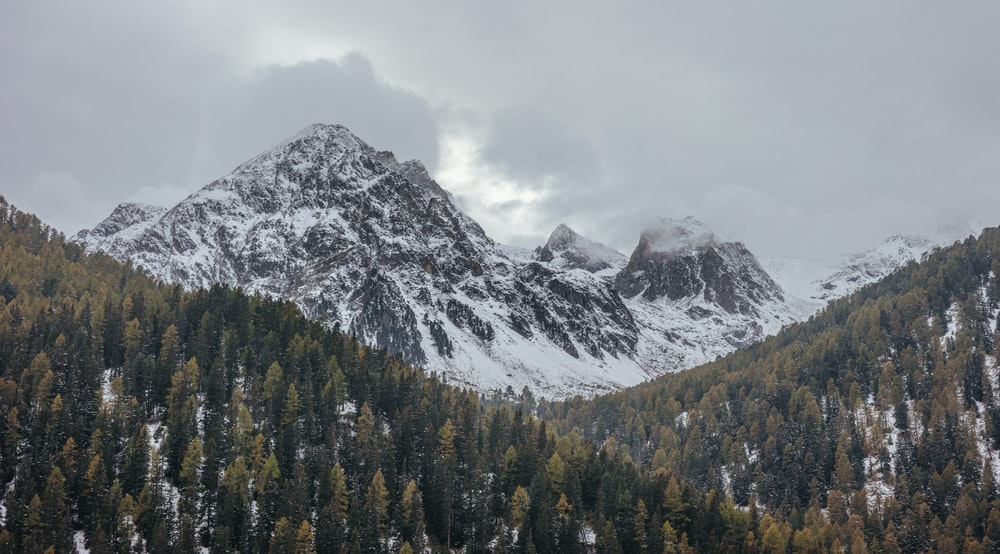 landscape photography of green leafed trees and mountain coated with white snow