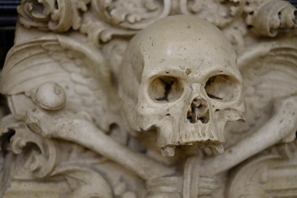 closeup photo of human skull