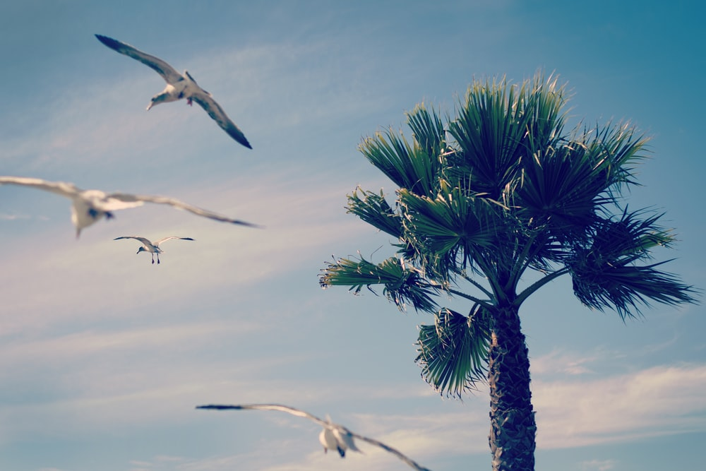 flock of birds flying near green tree during daytime