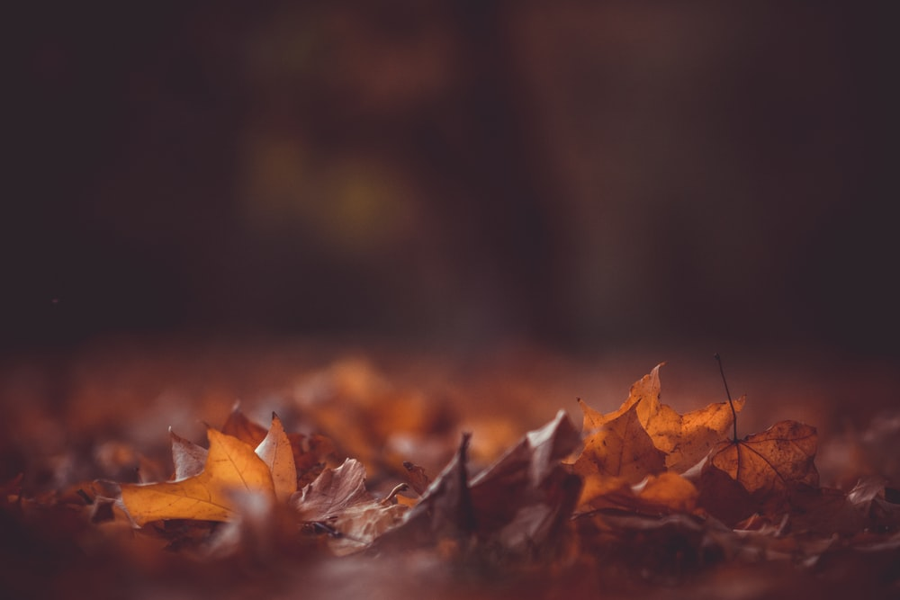 close-up photography of brown leaves