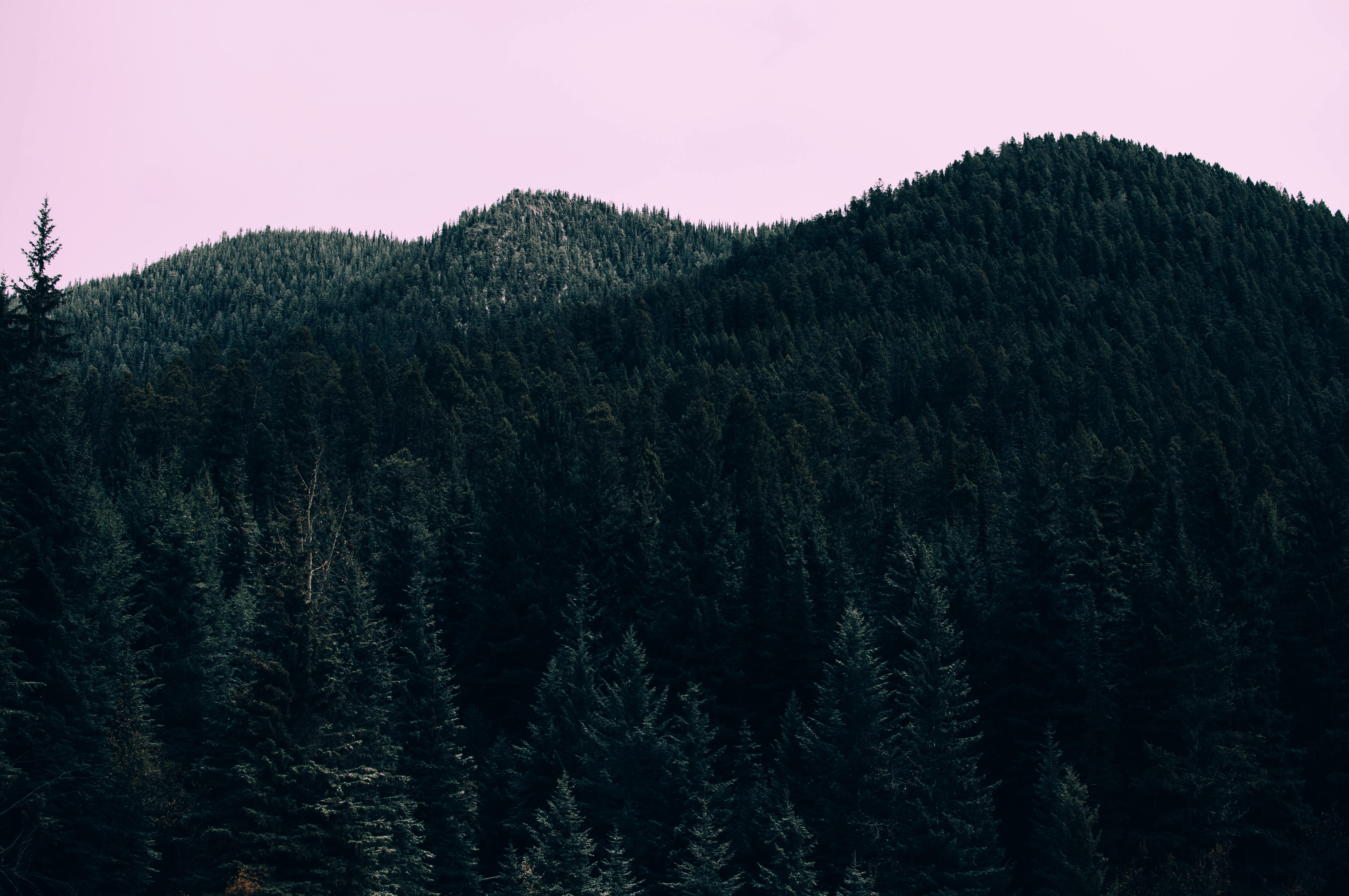 A pink sky over wooded mountain tops near Olive Lake