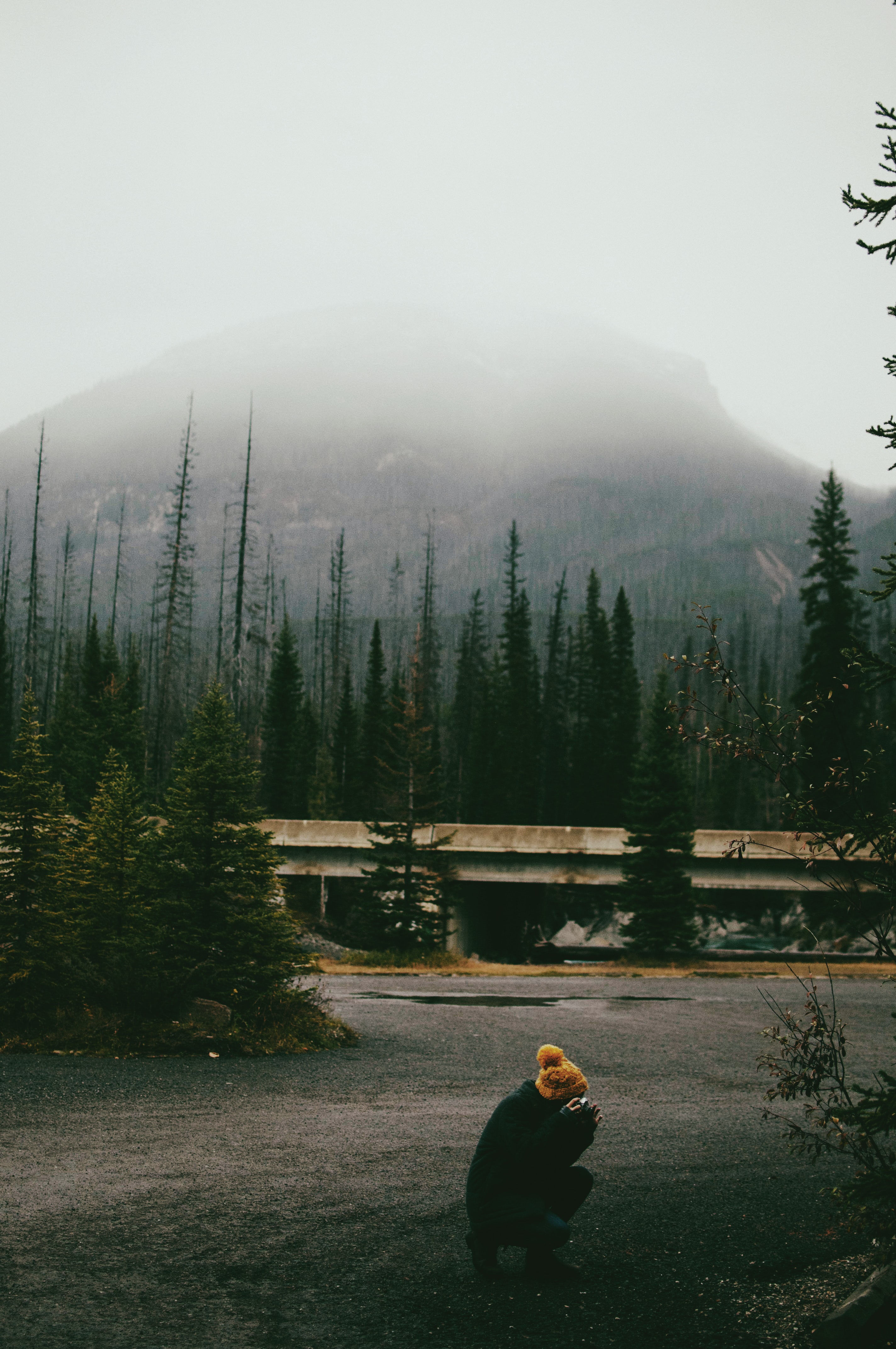 person near foggy mountain with trees