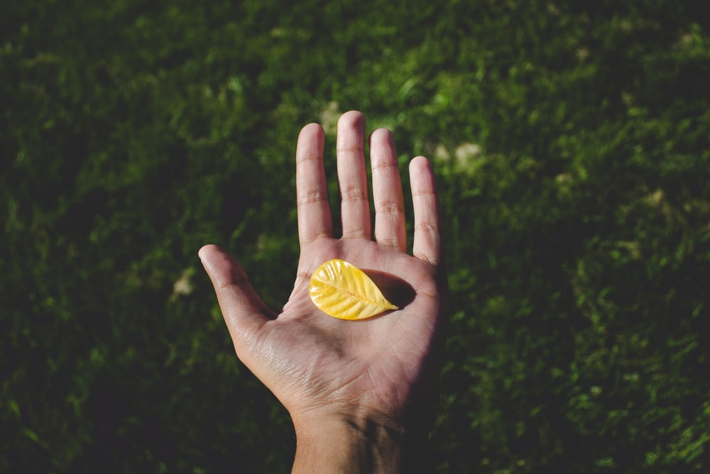 left human hand with yellow leaf