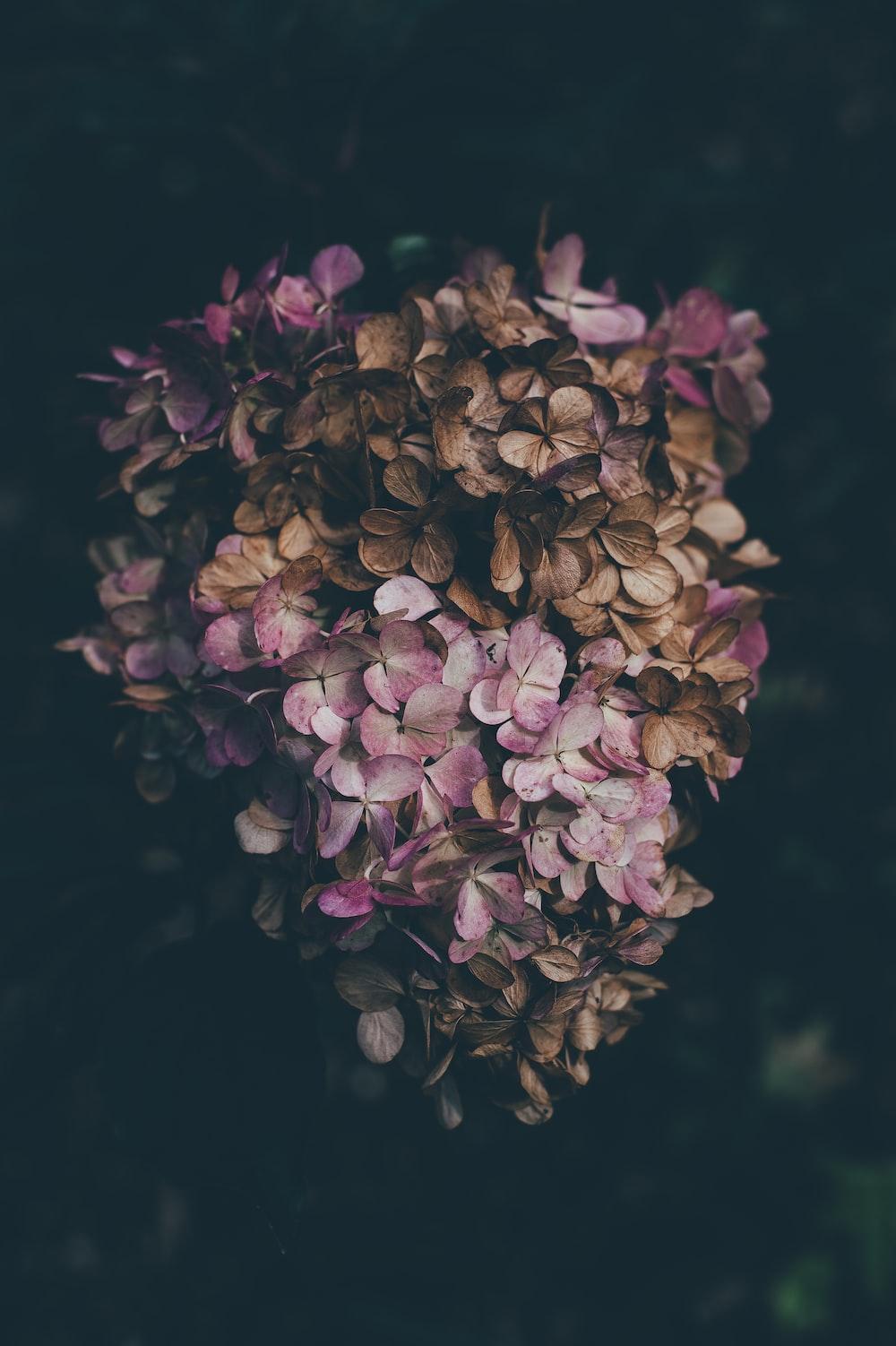 purple petaled flowers closeup photography
