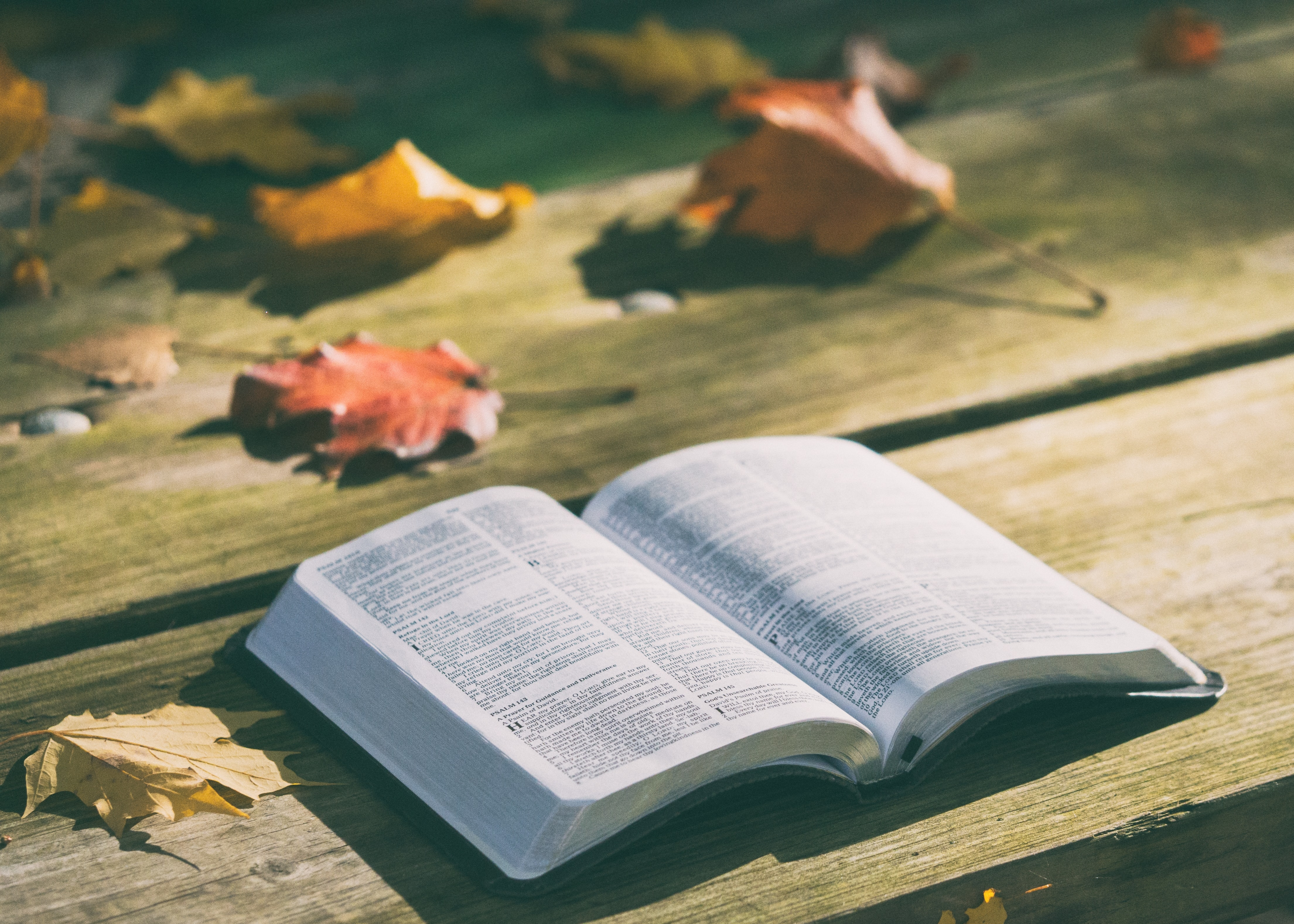 An open book on a wooden surface next to colorful autumn leaves