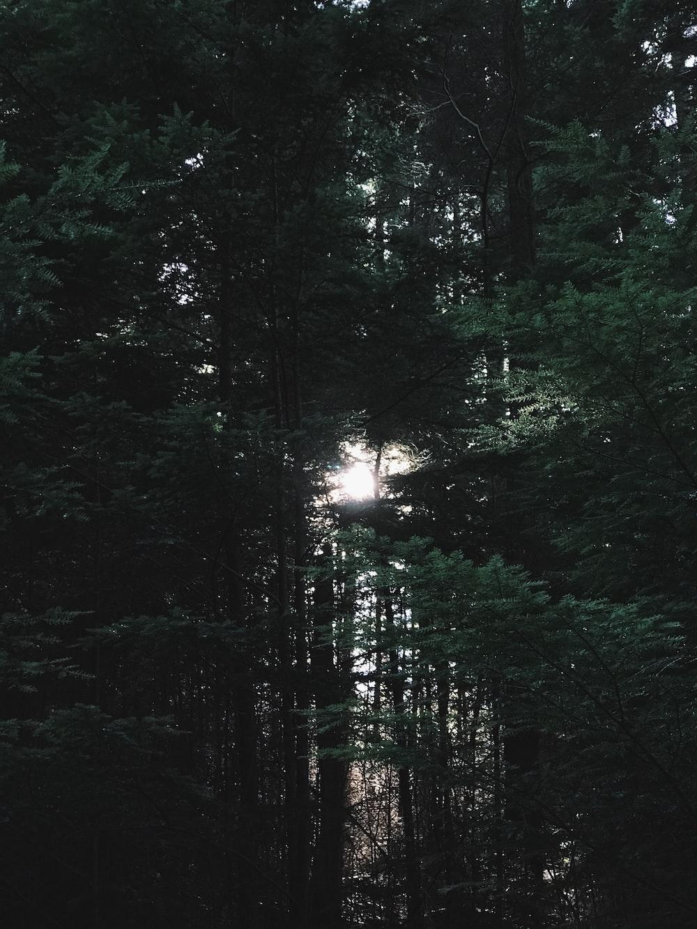 green tress at sunrise