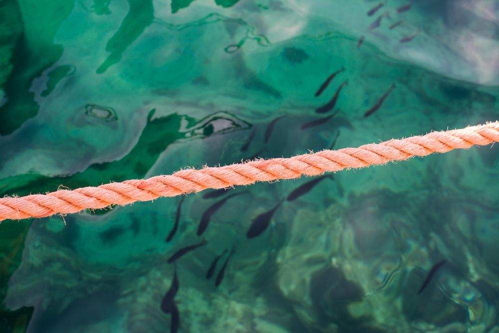 photo of orange rope beside green body of water