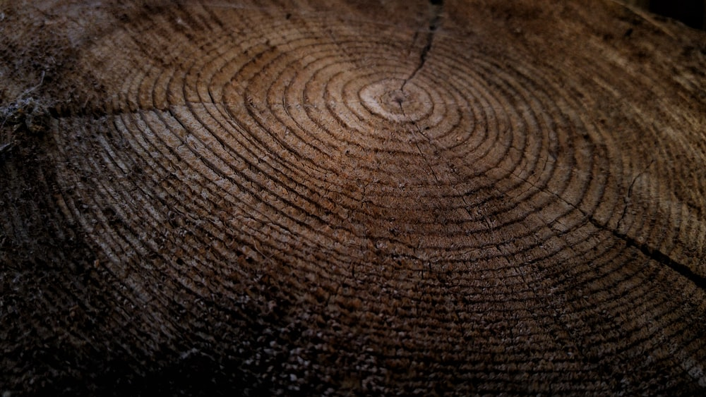Close-up of growth rings in a thick tree stump