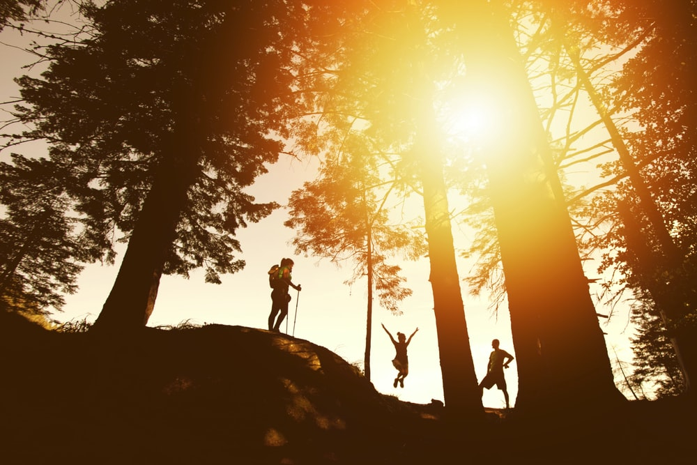 silhouette photo of three person near tall trees