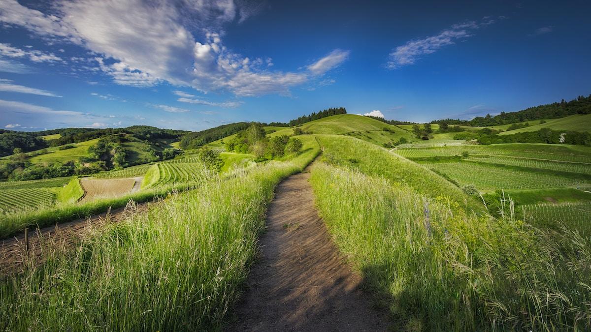 Landscape Design in Wellington, Colorado by Sparks Landscaping