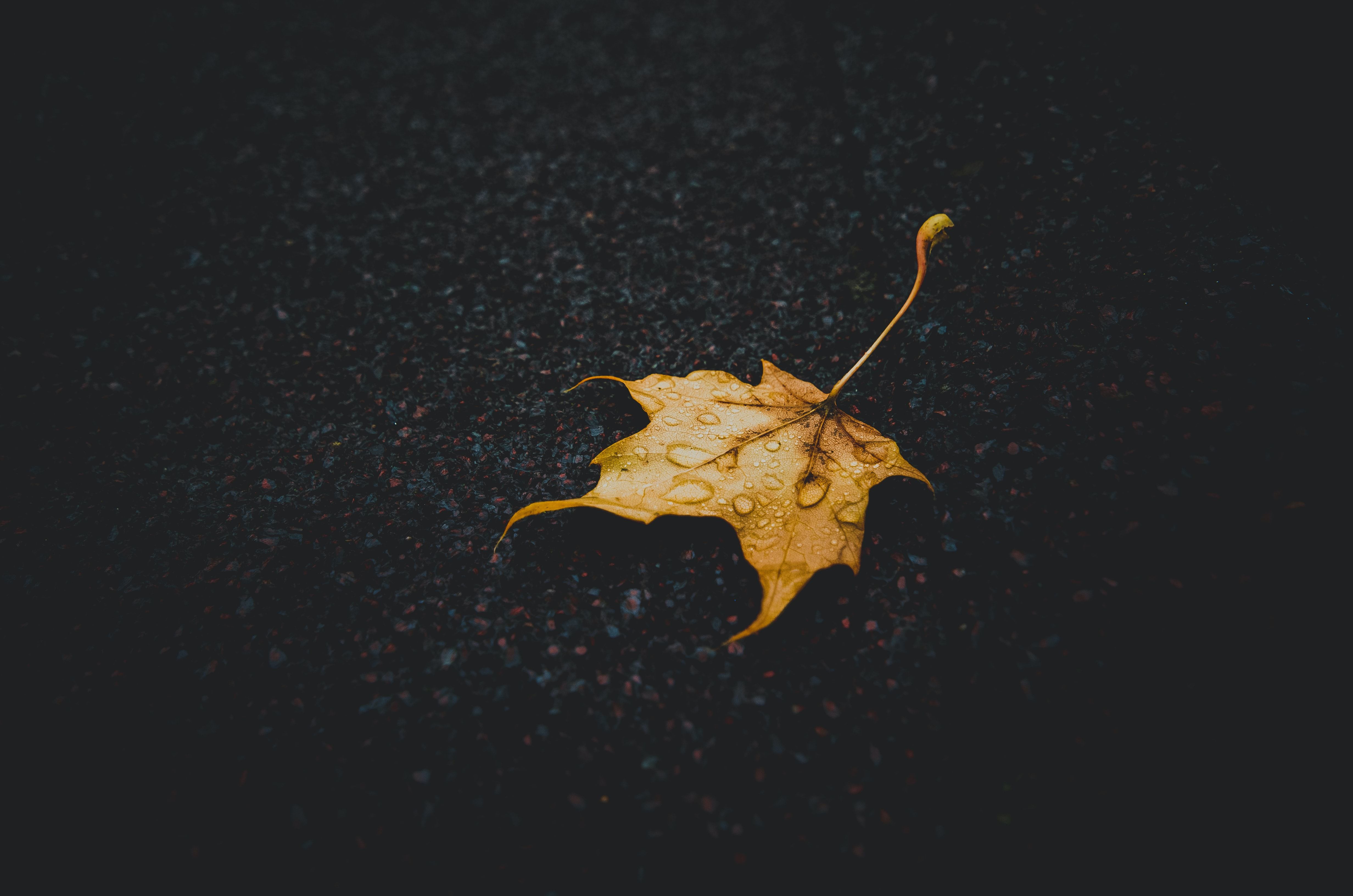 Single autumn leaf with rain droplets on wet pavement