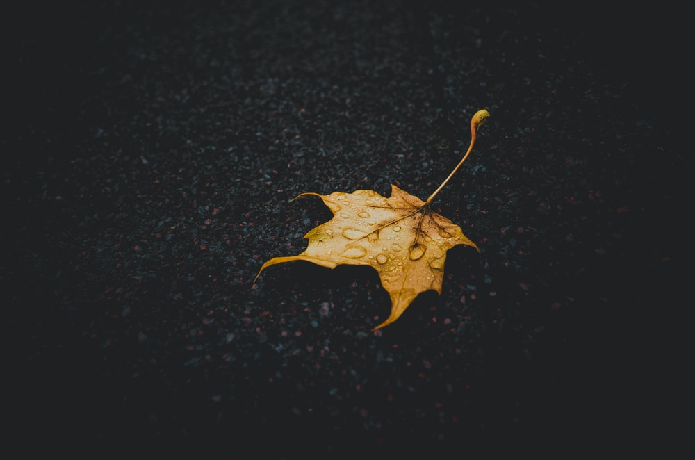 macro shot photography of brown maple leaf during rainy season