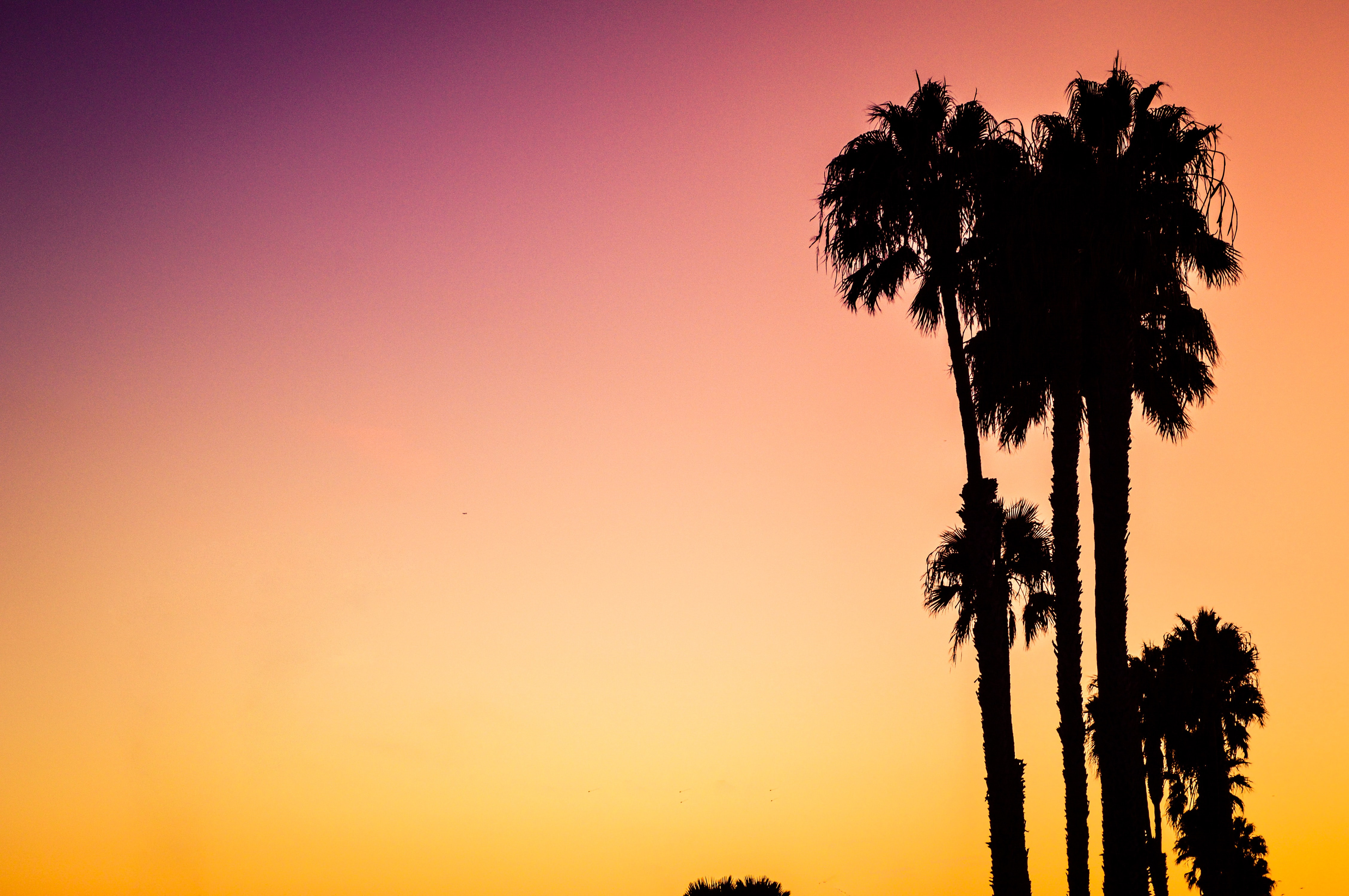 A silhouette of palm trees on Venice Beach, against a vibrant pink and orange sunset sky
