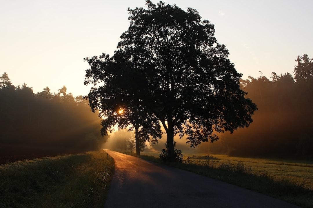 10 Quotes yang Berkaitan dengan Pepohonan