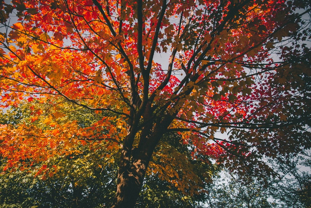 low angle view of yellow and red tree