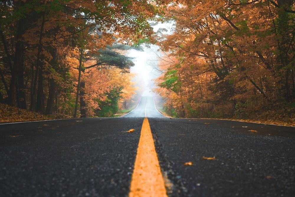 在棕色和綠色葉子樹之間的灰色混凝土路在白天
