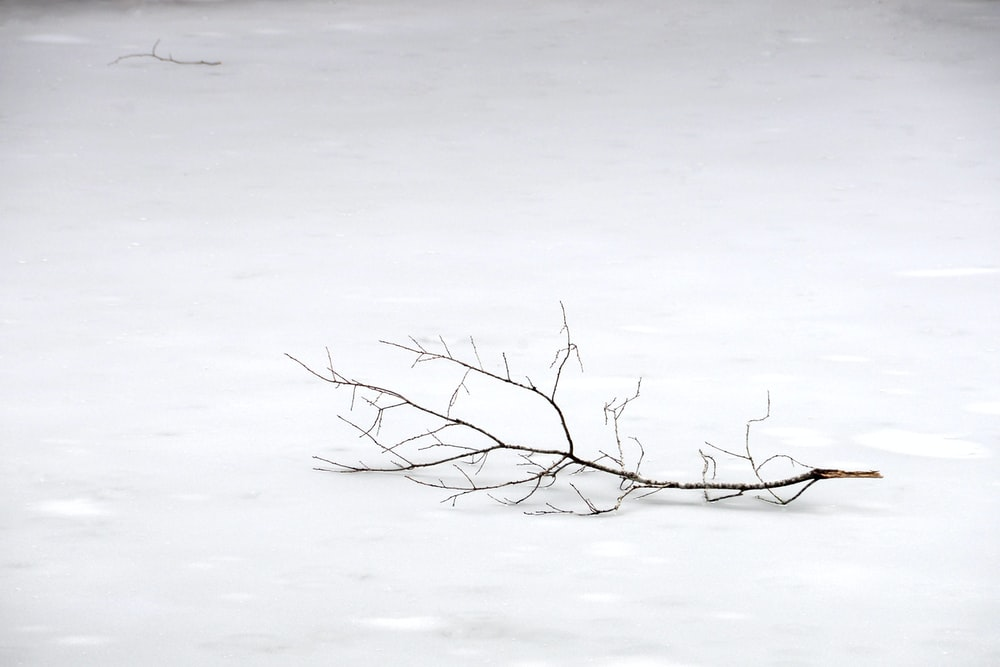 withered tree branch on snow