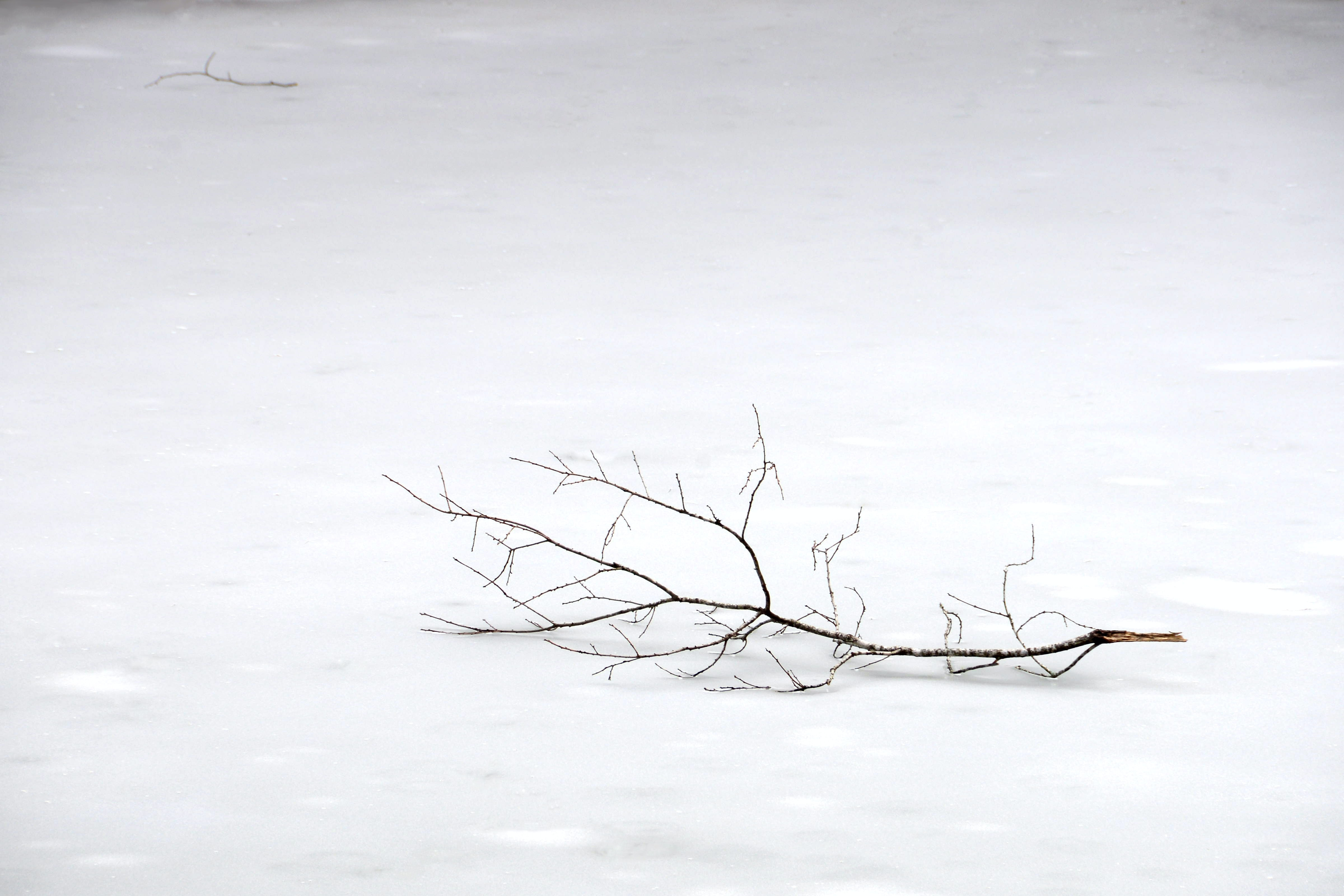 A large tree branch sitting in the snow