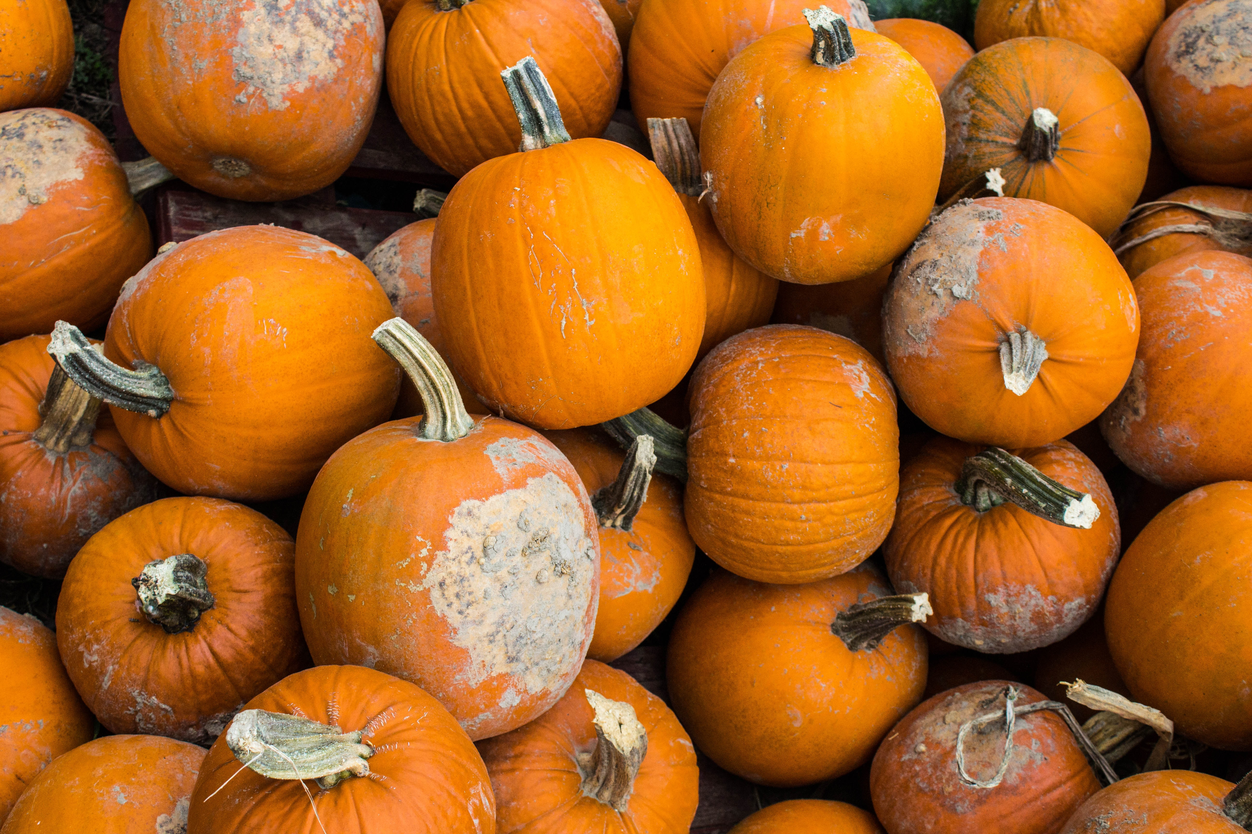 A collection of Halloween pumpkins with stems with patches on them