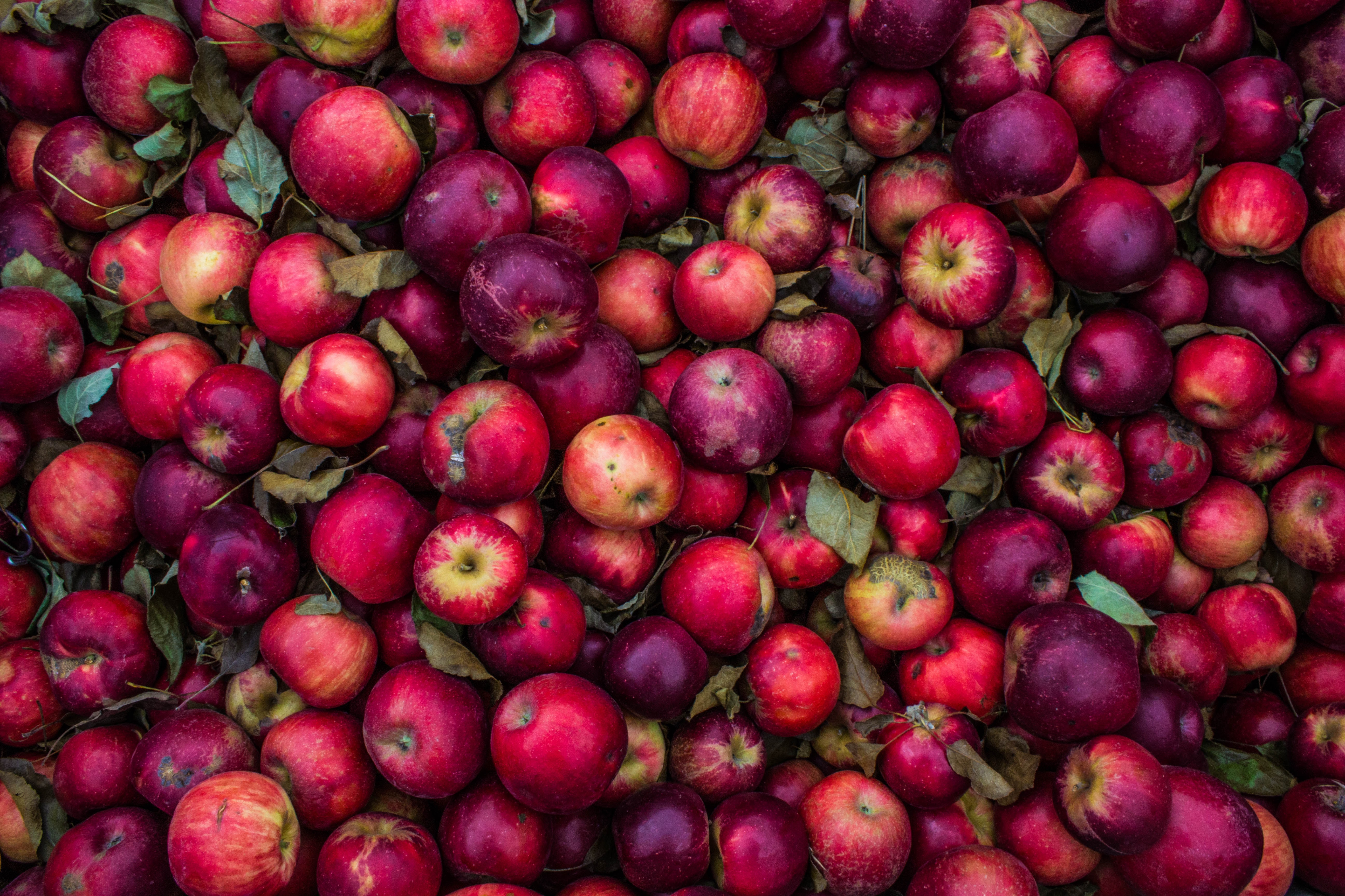 Pile of freshly picked red apples and purple fruit