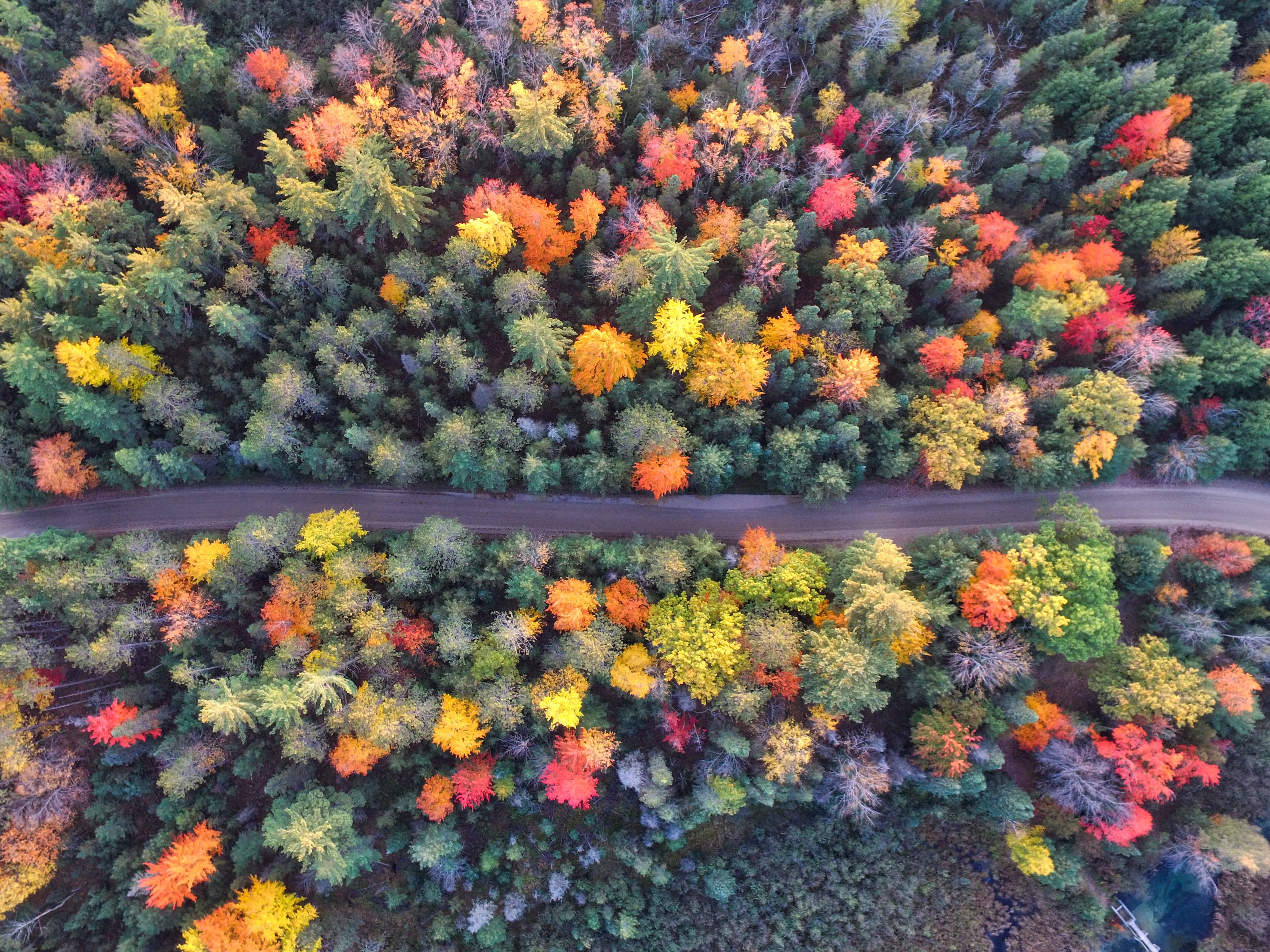A drone view of the trees changing colors during Autumn in Grayling, Michigan, United States