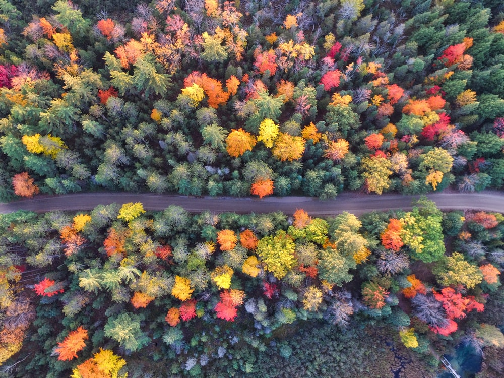 aerial photography of gray concrete road between assorted-color trees