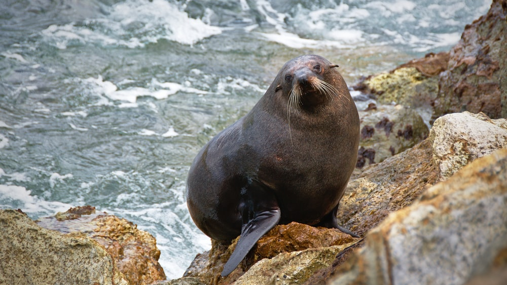 photo of seal on rocks