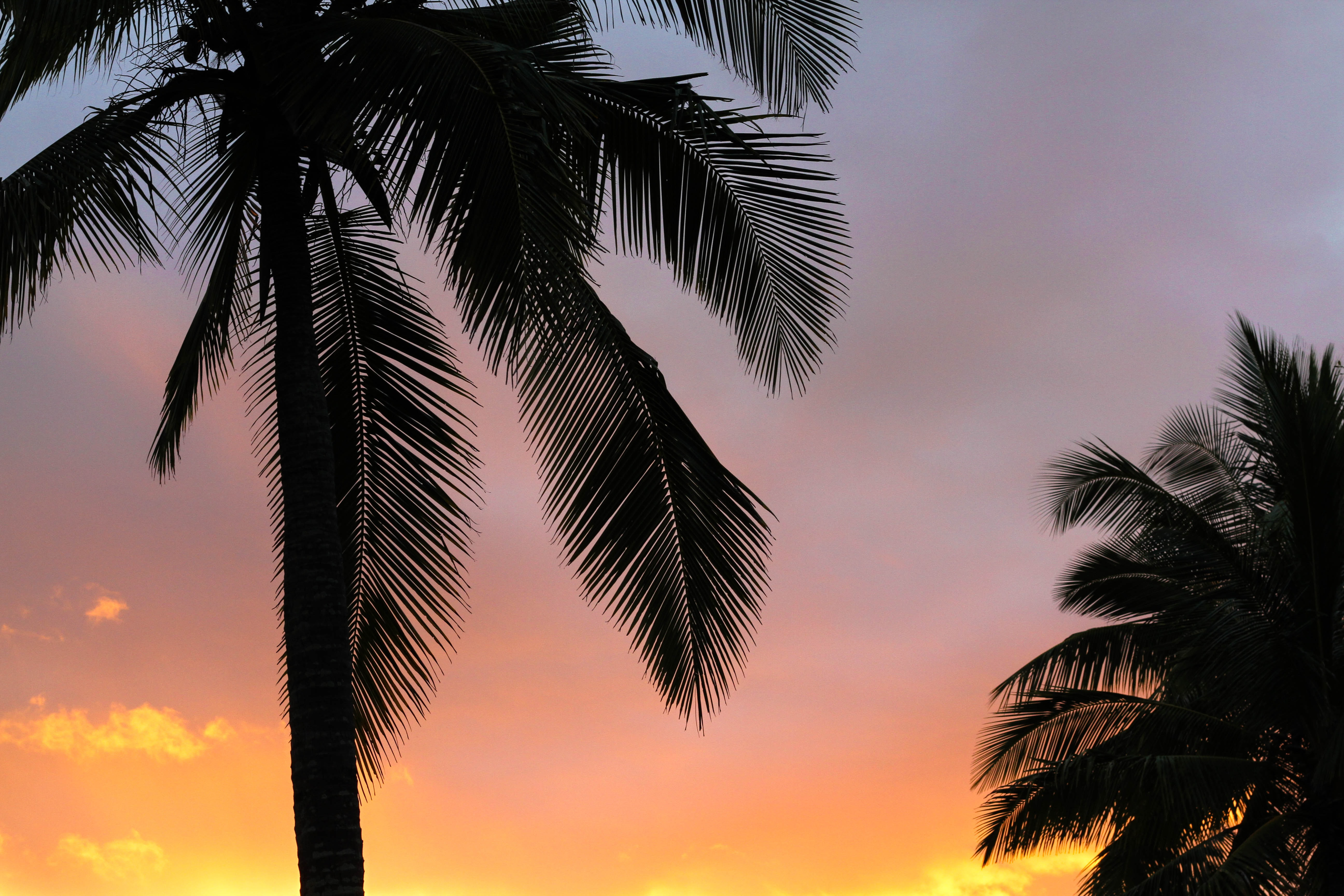 The silhouette of palm trees against an orange, pink, and purple sky during sunset