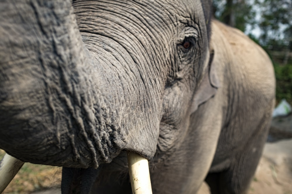 macro photography of elephant face