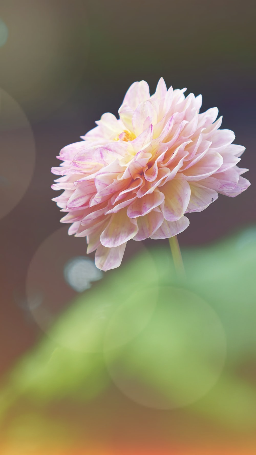 macrophotography of pink flower