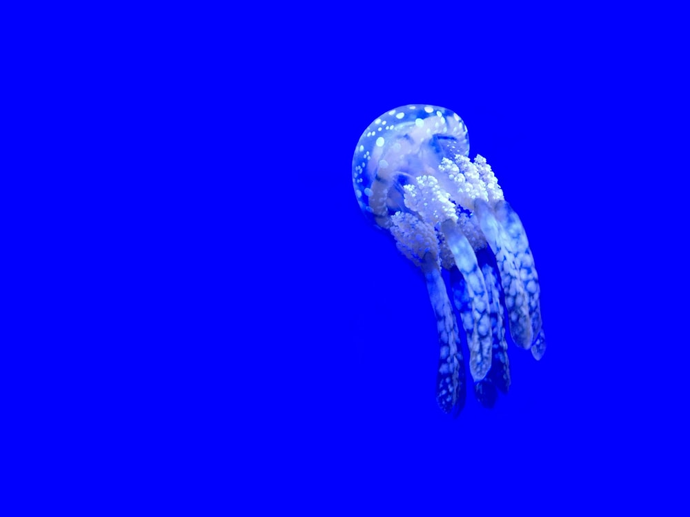 white and grey jellyfish