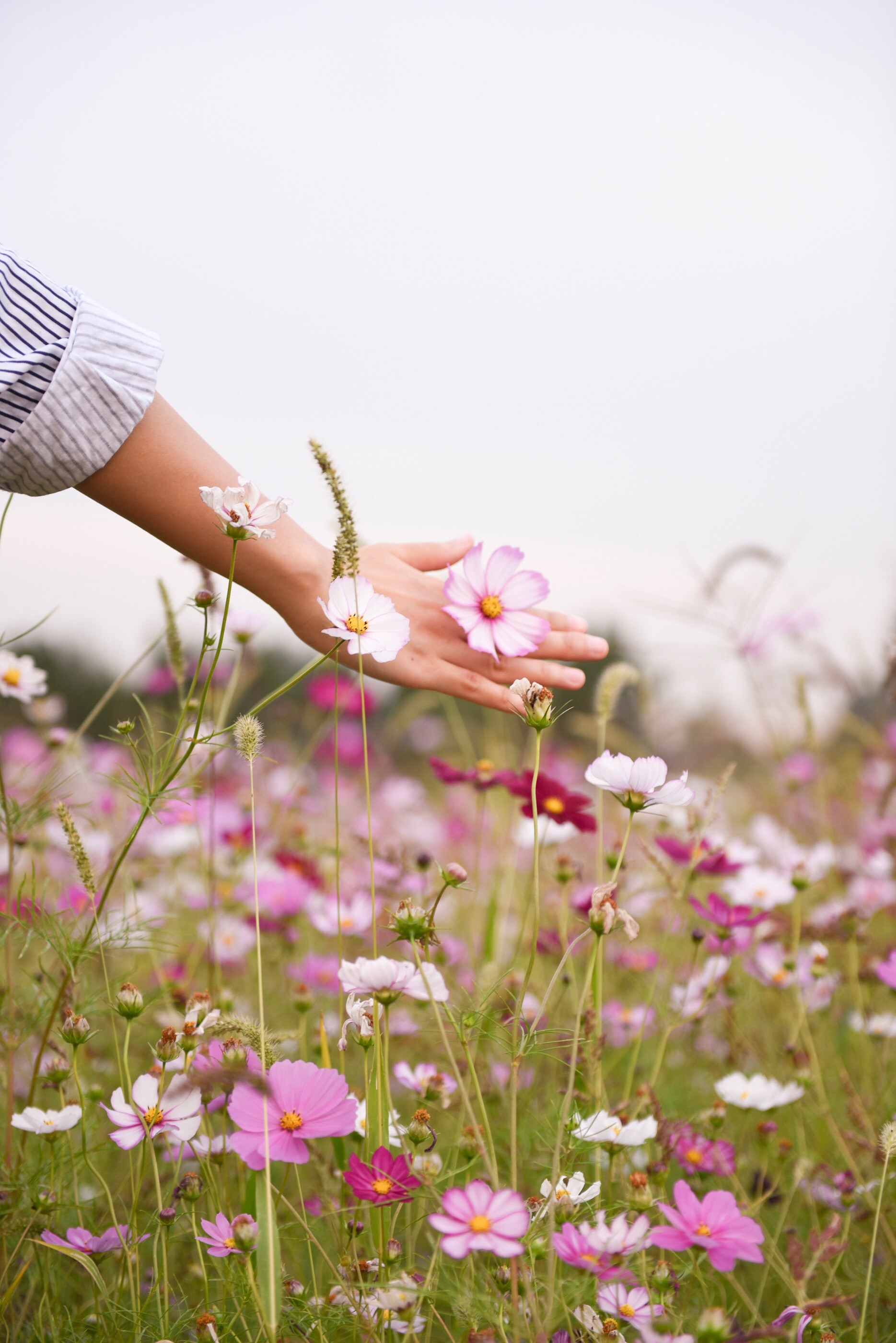 A woman's hand gently touching a pink flower in the meadow